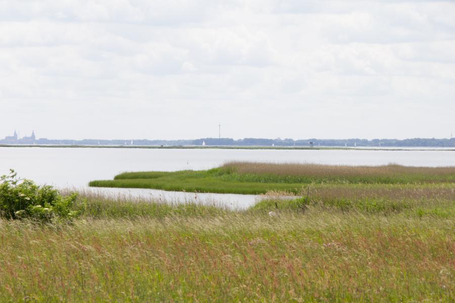 Vogelschutzinsel Heuwiese