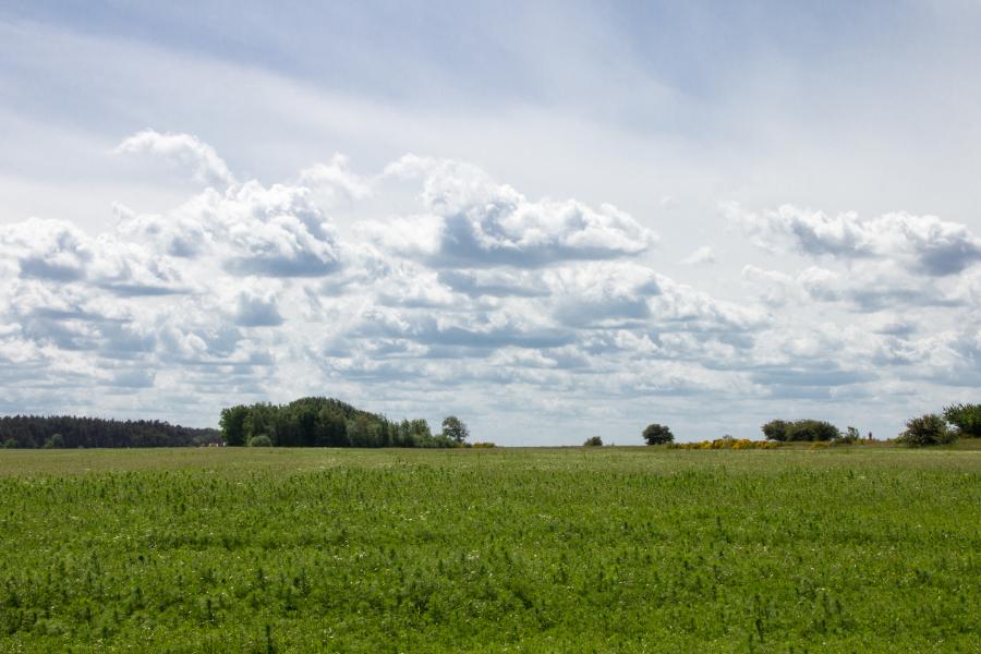 Ruhe in der Landschaft von Ummanz